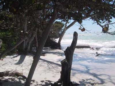 Hideaway picture 7 - beach view behind trees 2