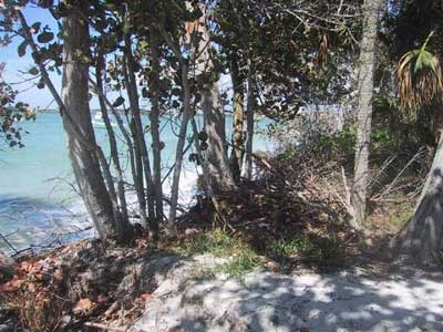 Hideaway picture 6 - beach view behind trees
