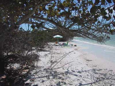 Hideaway picture 5 - beach view behind a tree