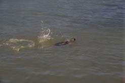 Stranding picture 4 - a turtle swimming