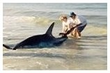 two persons moving a shark on the beach - thumbnail