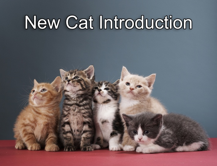 New Cat Introduction