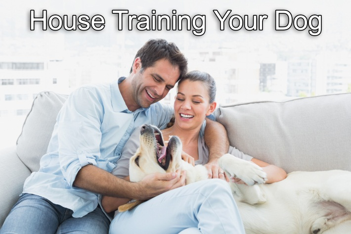 House Training 2
