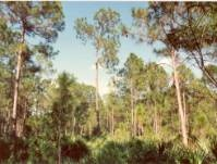 HCP Trees - picture of a forest