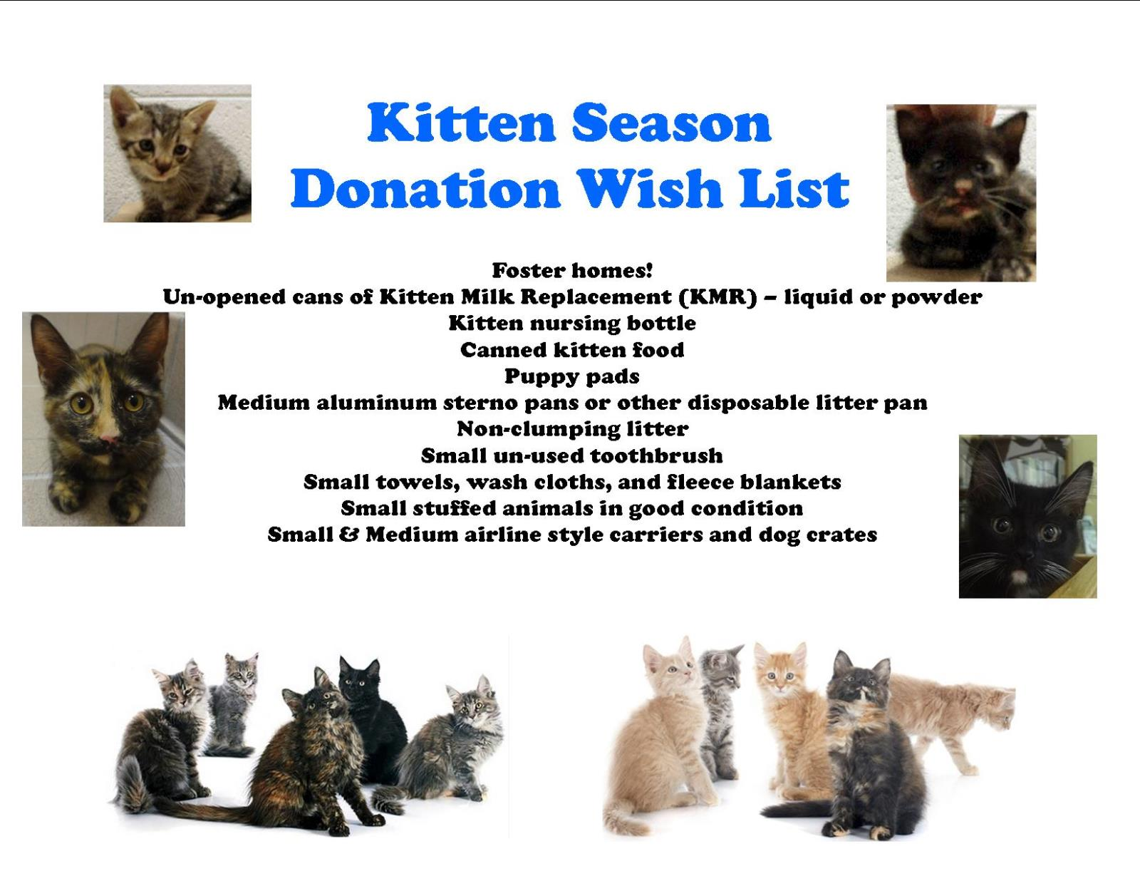 Kitten Season Donation Wish List