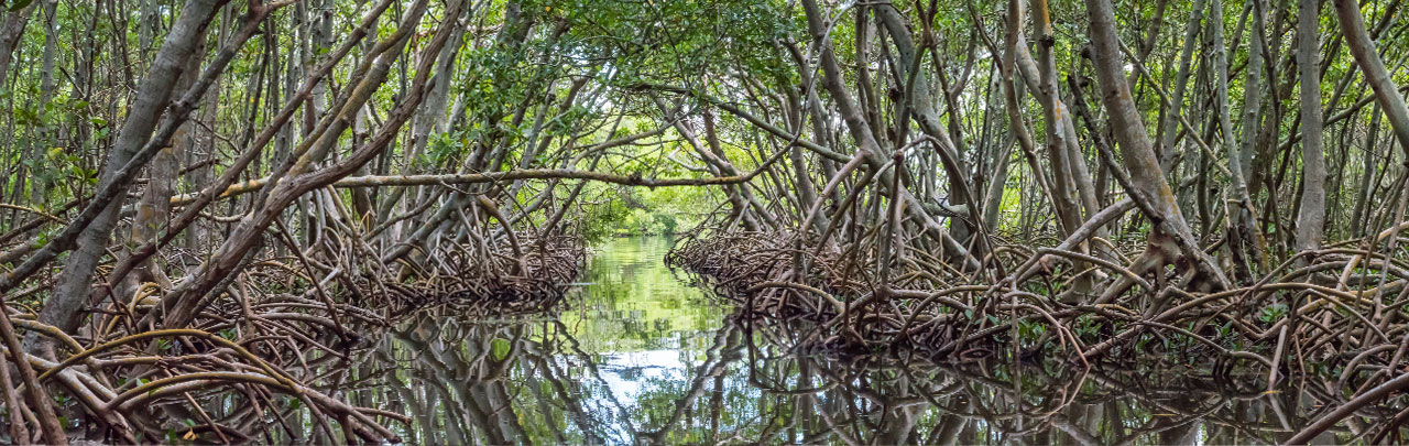pollution control mangroves collier county-1280x405