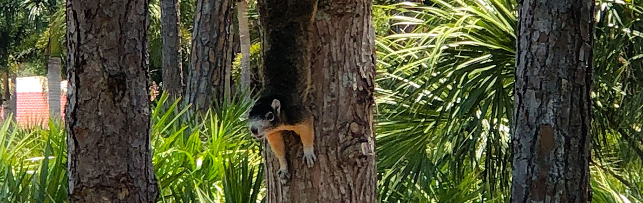 environmental services showing squirrel climbing down a tree