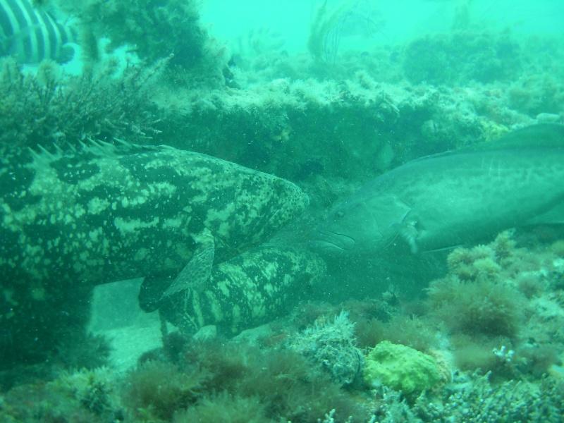 Florida Artificial Reefs Map.Artificial Reef Program Collier County Fl