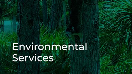 Development Review Environmental Services button