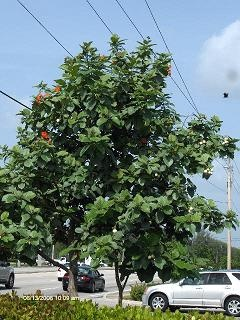 Collier County And Tree Care Collier County Fl